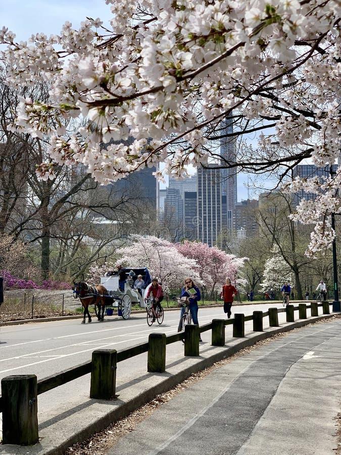 Central Park na primavera, New York City, EUA foto de stock
