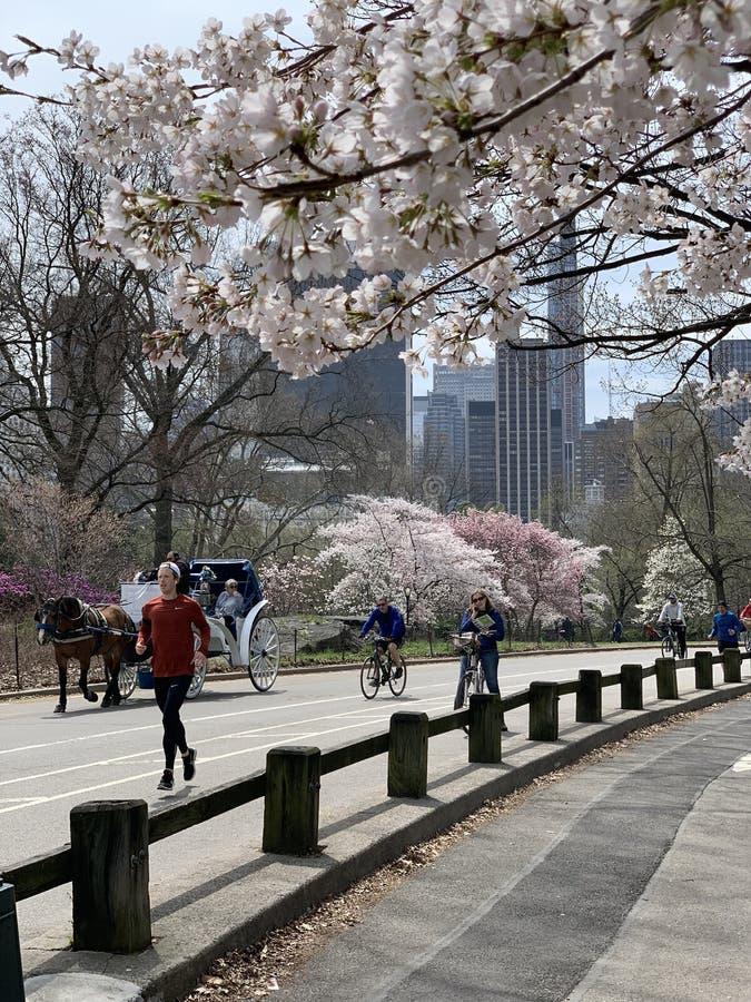 Central Park na primavera, New York City, EUA imagem de stock