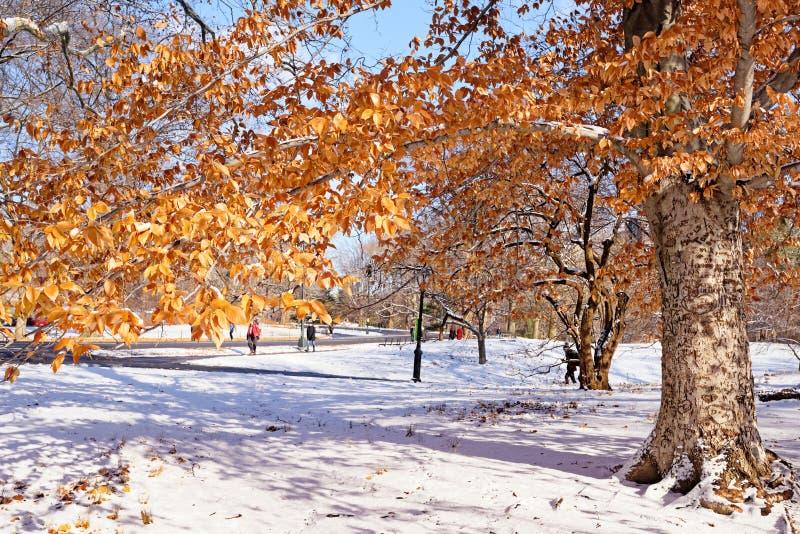 Central Park Nevado en New York City imagen de archivo libre de regalías
