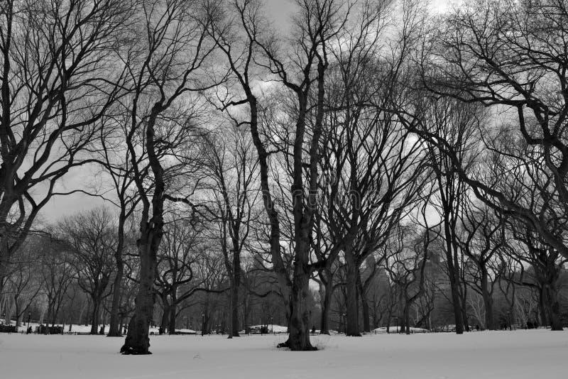 Central Park nevoso blanco y negro imagen de archivo