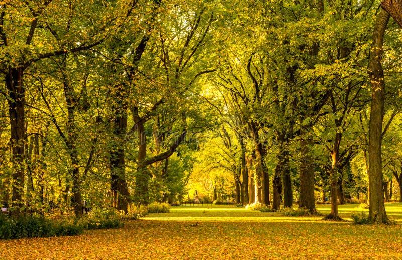 Central Park, New York fotografia stock libera da diritti