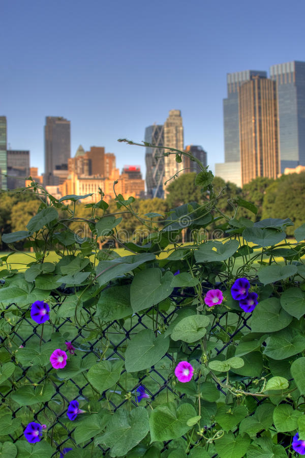 Central Park New York imagens de stock