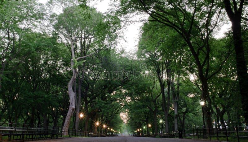 Central Park in New York stock afbeeldingen