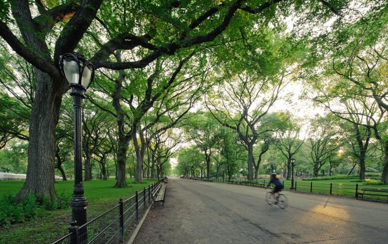 Central Park in New York lizenzfreies stockbild