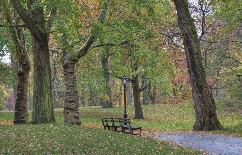 Central Park, New York City, outono, amanhecer imagem de stock
