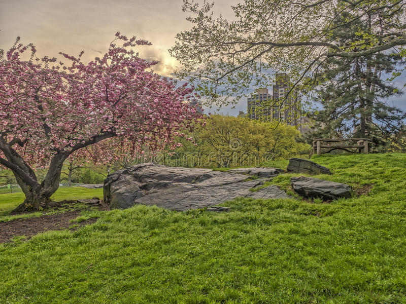 Central Park, New York City spring stock photography