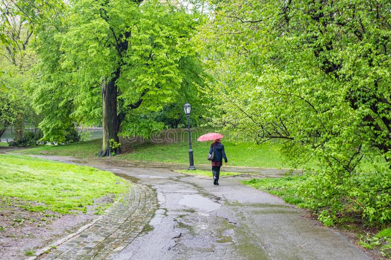 Central Park, New York city. Woman walking on a path holding an umbrella, rainy spring day royalty free stock photo