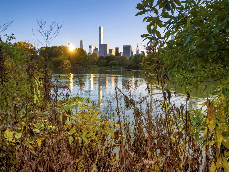 Central Park, New York. Urban shelter from noise and violent sounds of the big city. stock photos