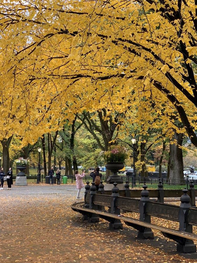 Central Park no outono, New York City fotos de stock