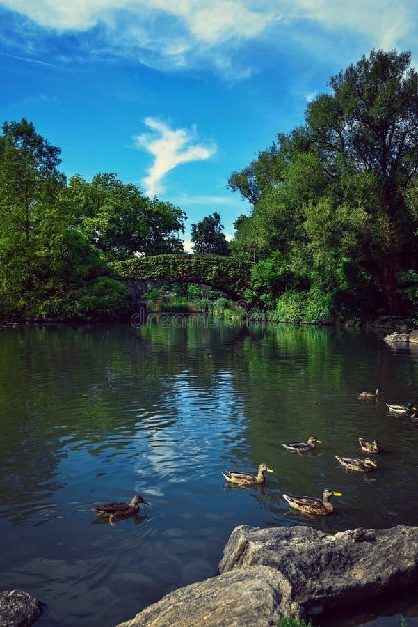 Central Park Nueva York imagen de archivo
