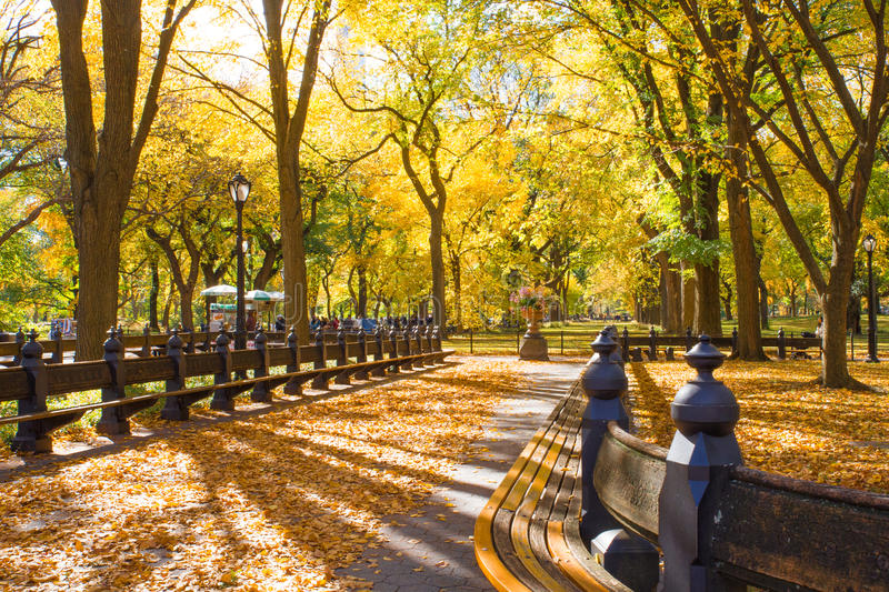 Central Park NY. Beautiful autumn scene from Central Park, New York City, Manhattan royalty free stock photos