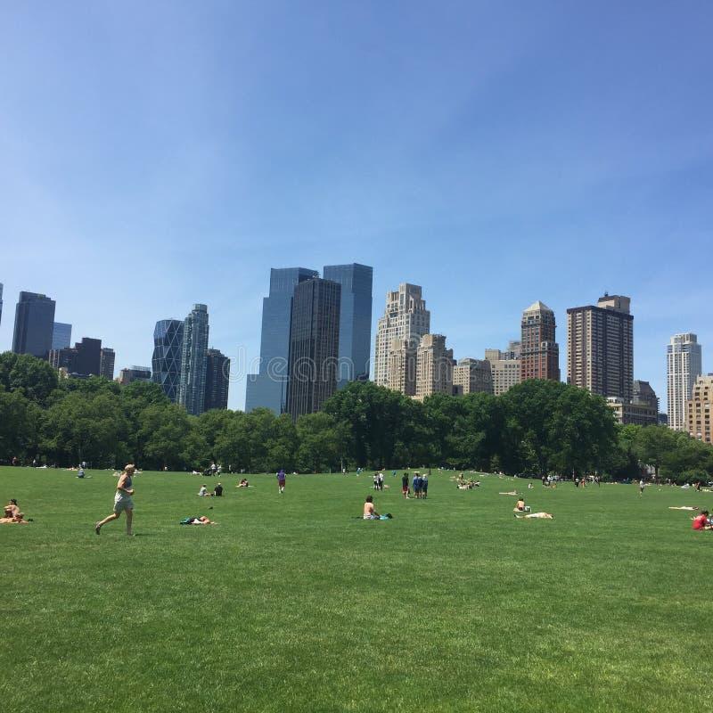 Central Park Sheep łąka obraz royalty free