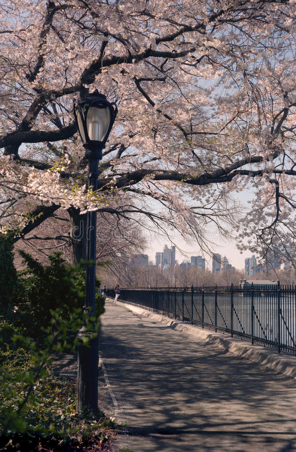 Download Central Park Spring Cherry Blossoms , NYC USA Stock Image - Image: 23449221