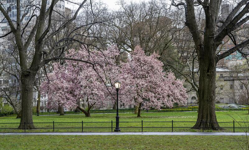 Central Park in spring royalty free stock images