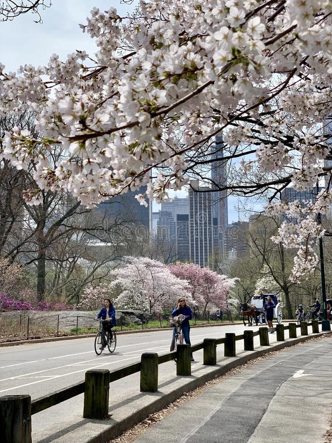 Central Park in the spring, New York City, USA. royalty free stock image