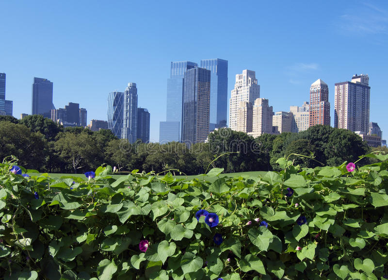 Download Central Park in summer stock image. Image of cityscape - 14152425