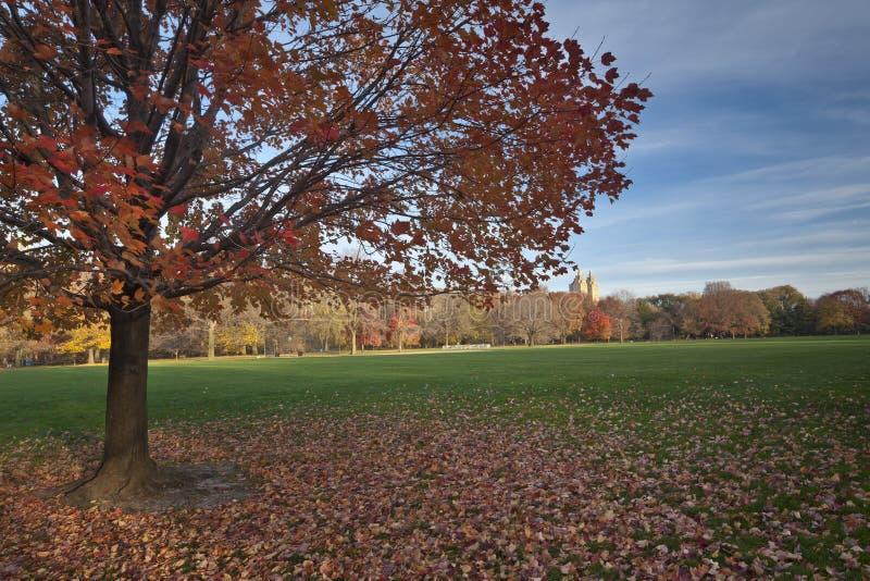 Centrala Park obraz royalty free