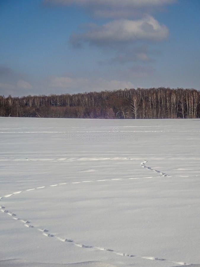 centrala przedstawia mróz marznącą jeziora krajobrazu fotografii fotografię Russia surowi brać drzewa zima bardzo byli zdjęcie stock