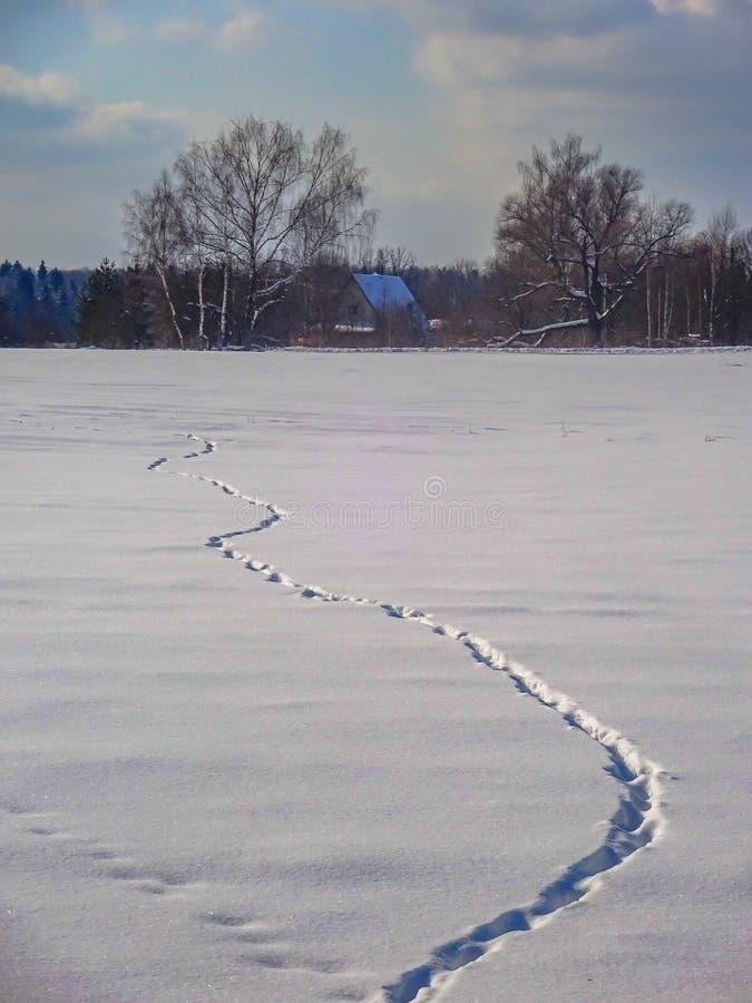 centrala przedstawia mróz marznącą jeziora krajobrazu fotografii fotografię Russia surowi brać drzewa zima bardzo byli obraz royalty free