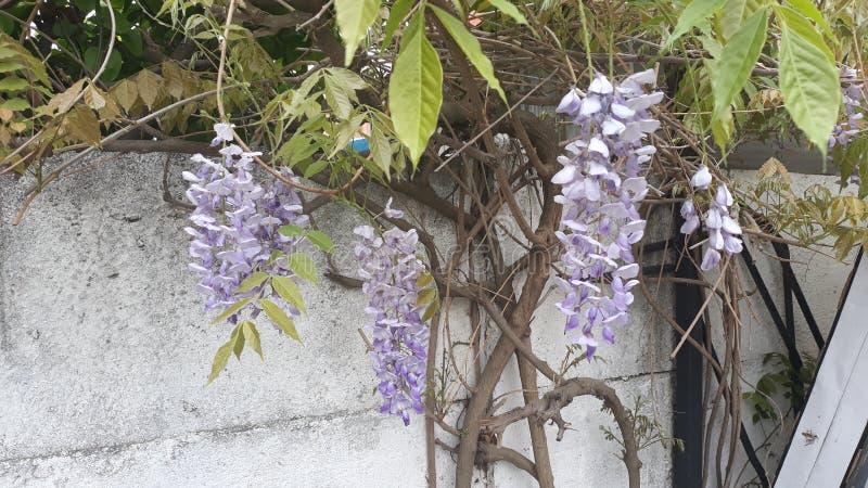 Centrale d'escalade des fleurs naturelles de printemps photos libres de droits