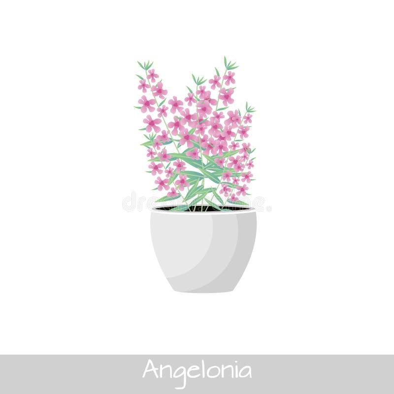 Centrale dans le bac Fleur d'Angelonia Style plat illustration libre de droits
