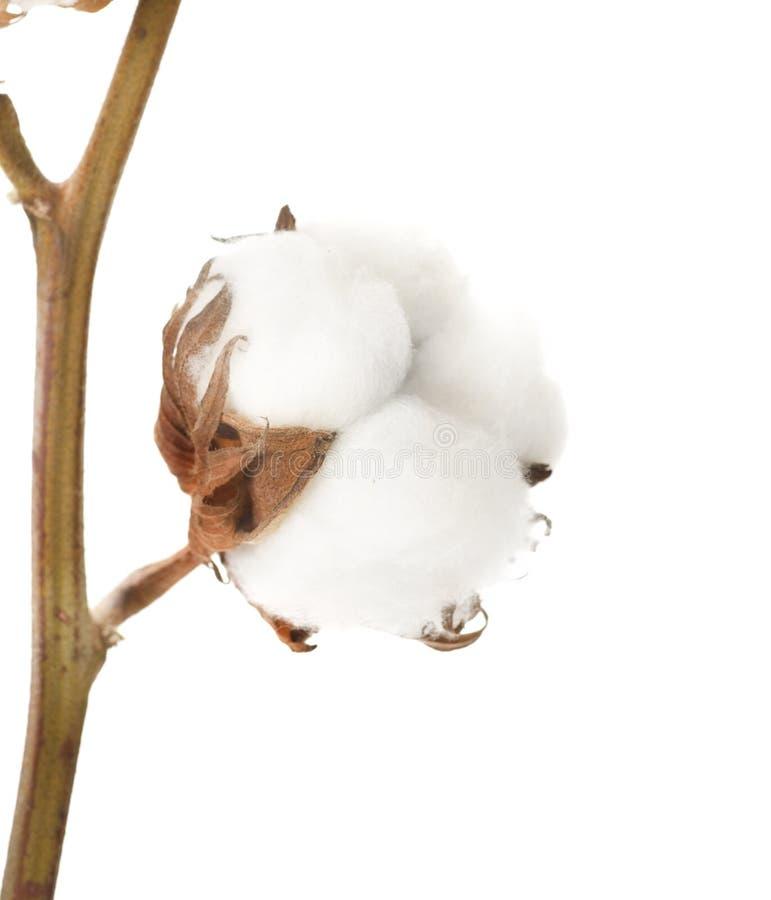 Centrale de coton image libre de droits