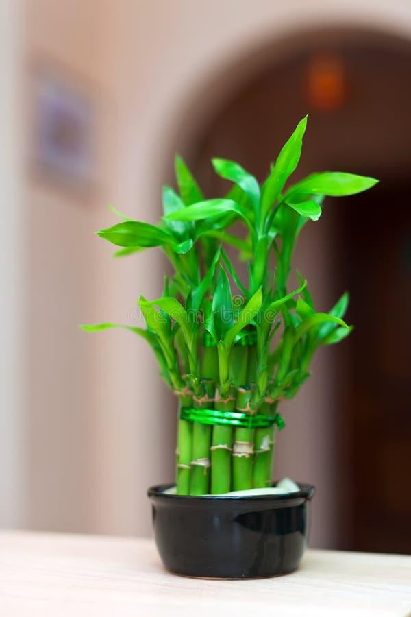 Centrale en bambou chanceuse photos stock