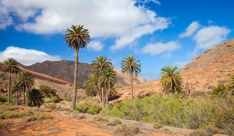 Centrale Fuerteventura, Barranco DE los Penitas royalty-vrije stock afbeeldingen