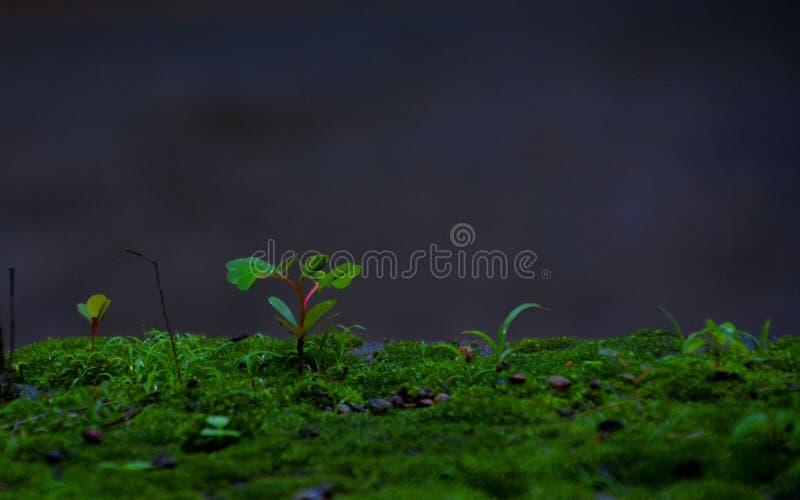 Centrale minuscule photographie stock