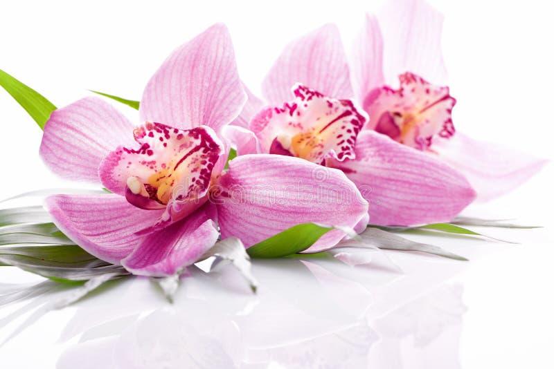 Centrale rose tropicale d'orchidée images stock