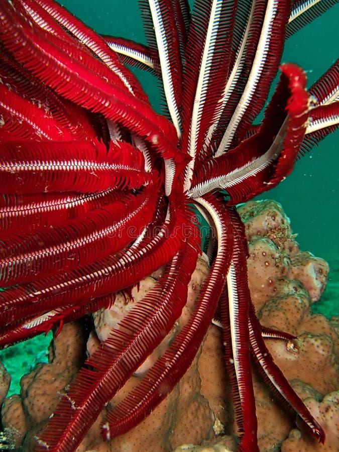 Centrale sous-marine rouge photographie stock