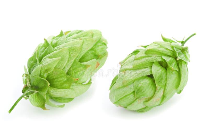 Centrale verte d'houblon images stock