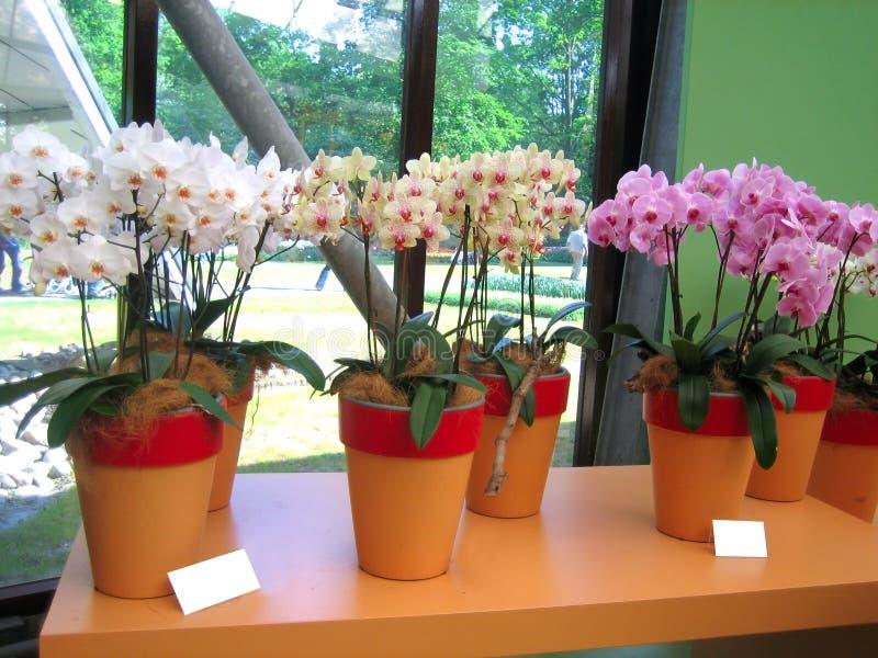 Centrales d'orchidée photo libre de droits