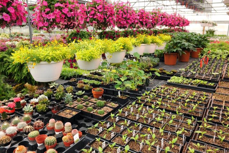 Centrales de fleurs et de Catus à l'intérieur de pépinière image libre de droits
