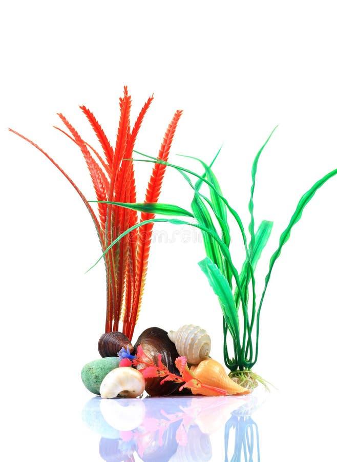 Centrales et sea-shells d'aquarium images libres de droits