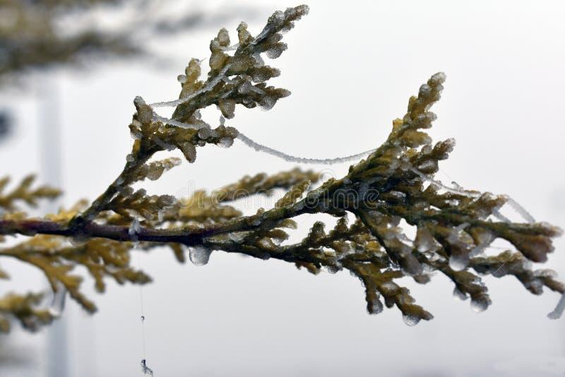 Centrales fig?es en hiver image stock