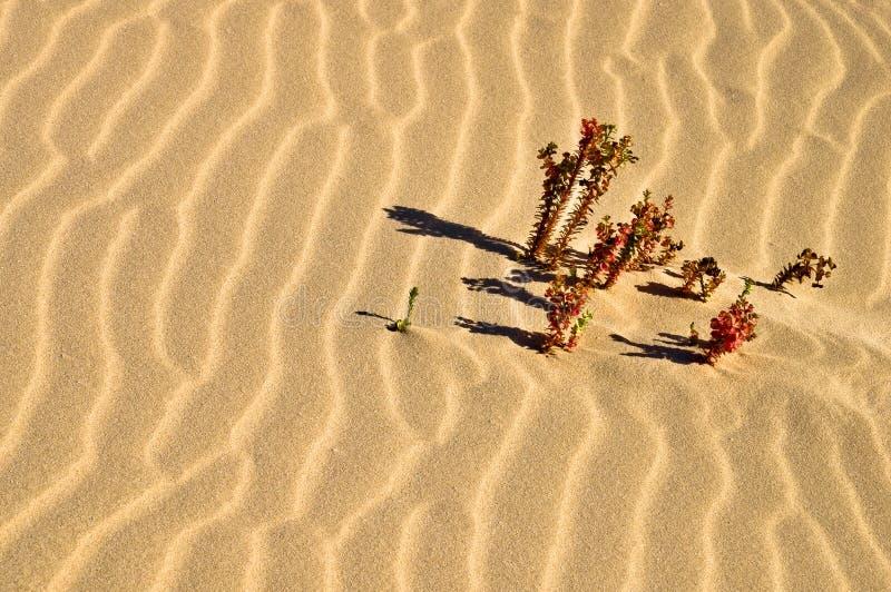 Centrales sur la mer des sables de désert photos stock