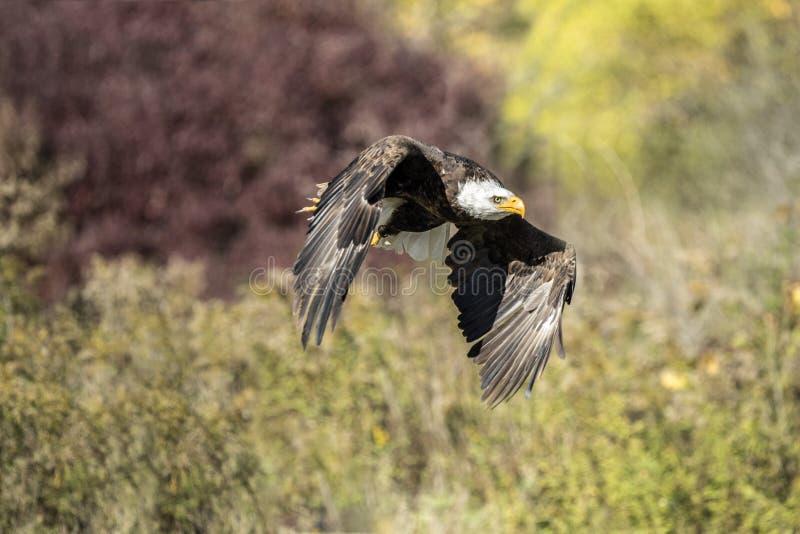 Centre de détection et de contrôle d'Eagle chauve photo libre de droits