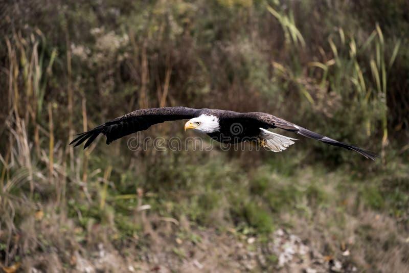 Centre de détection et de contrôle d'Eagle chauve photographie stock libre de droits