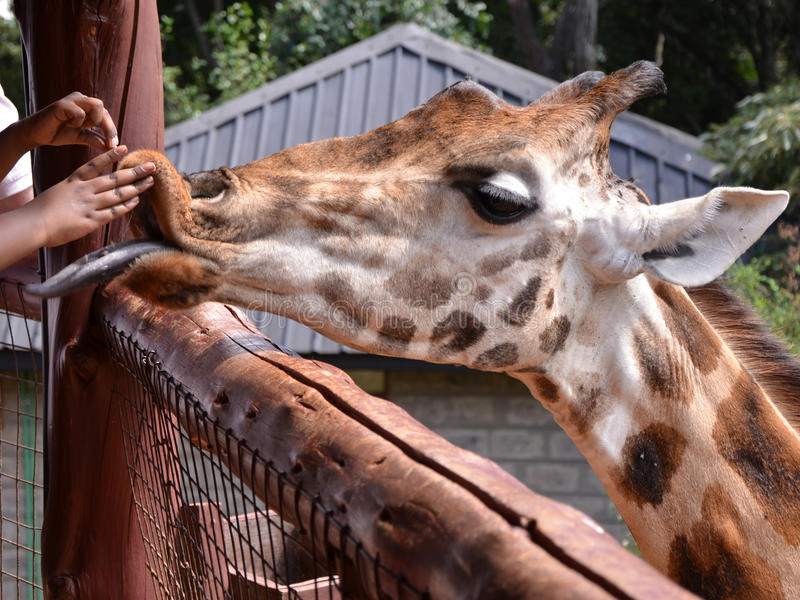 Centre Nairobi de girafe images stock
