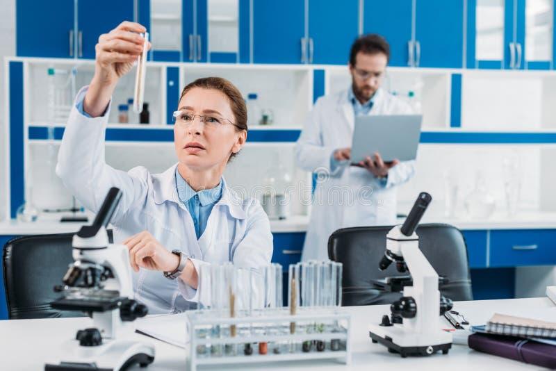 centre sélectif de scientifique féminin regardant le tube avec du réactif à disposition avec le collègue derrière photos stock