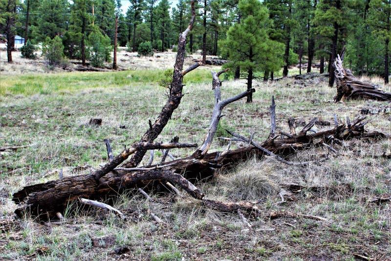 Centro blanco de la naturaleza de la montaña, Pinetop Lakeside, Arizona, Estados Unidos foto de archivo libre de regalías
