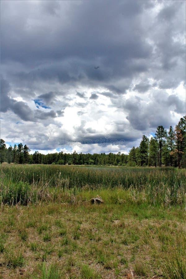 Centro blanco de la naturaleza de la montaña, Pinetop Lakeside, Arizona, Estados Unidos imágenes de archivo libres de regalías