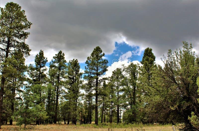 Centro blanco de la naturaleza de la montaña, Pinetop Lakeside, Arizona, Estados Unidos fotografía de archivo