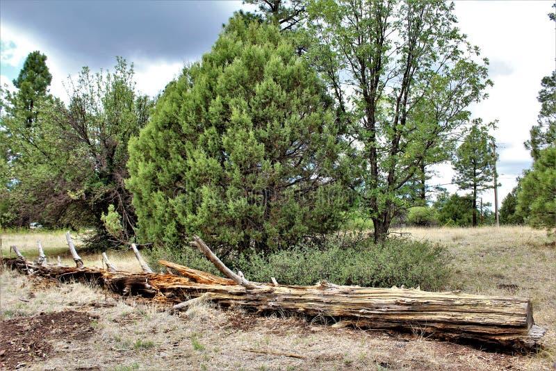 Centro blanco de la naturaleza de la montaña, Pinetop Lakeside, Arizona, Estados Unidos imagen de archivo libre de regalías