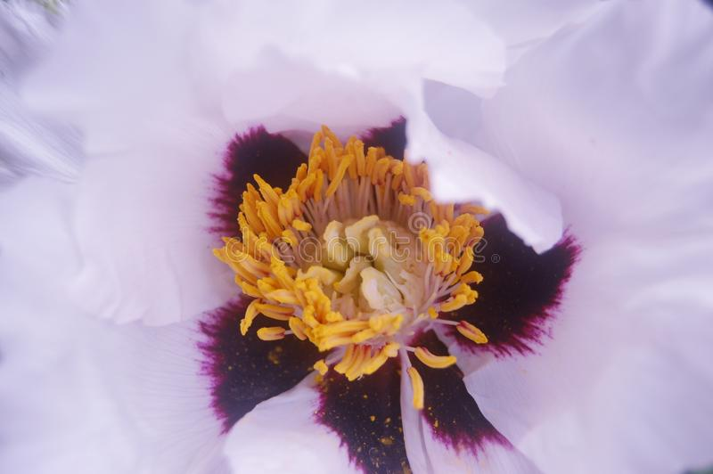 Centro bonito da flor branca especialmente para uma menina fotos de stock royalty free