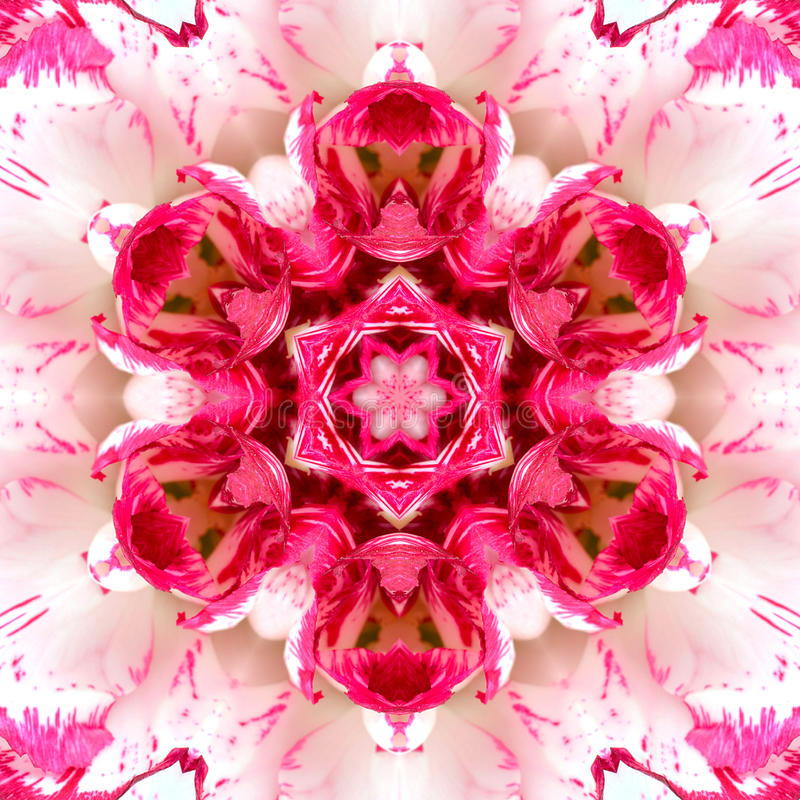 Centro concéntrico rosado de la flor. Diseño de Mandala Kaleidoscopic foto de archivo libre de regalías