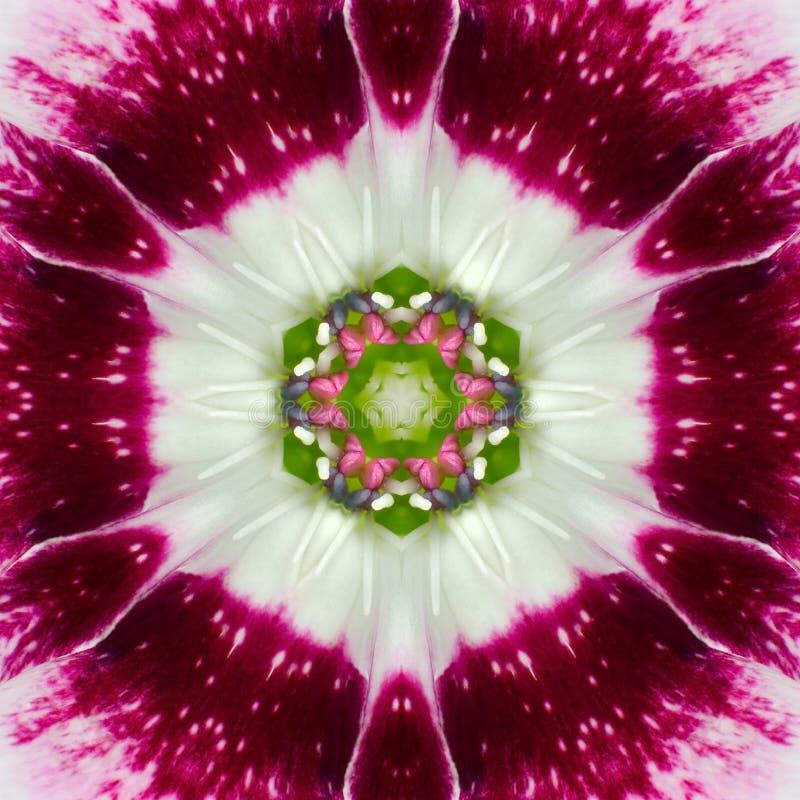 Centro concéntrico rosado Mandala Kaleidoscope de la flor foto de archivo libre de regalías