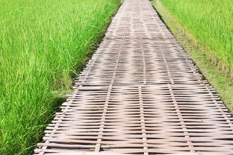 Centro de bambú de la calzada del campo grande del arroz, fondo de la naturaleza fotografía de archivo