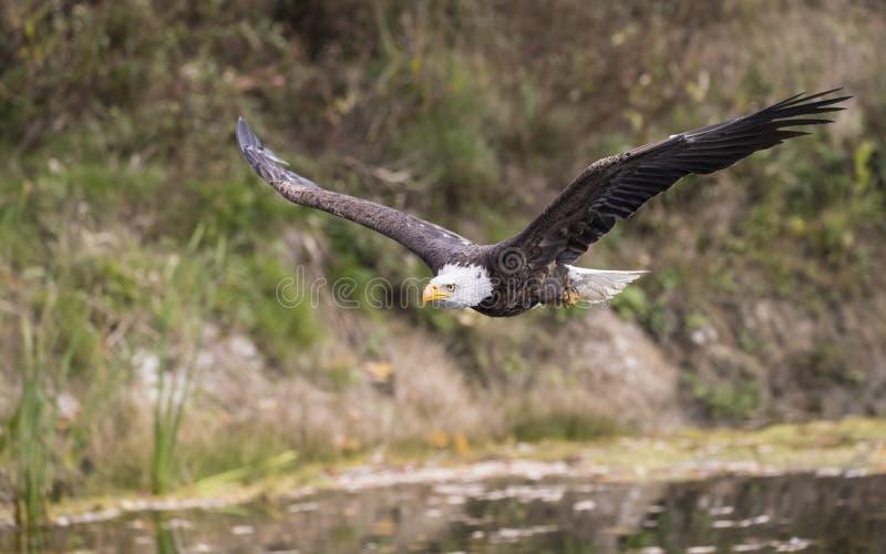 Centro de detecção e de controlo da águia americana imagens de stock royalty free